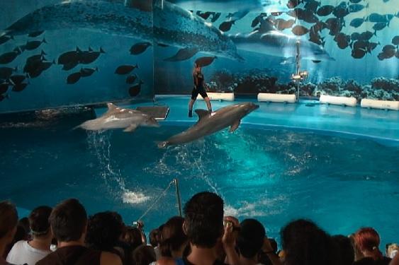 Barcelona dolphins_FAADA