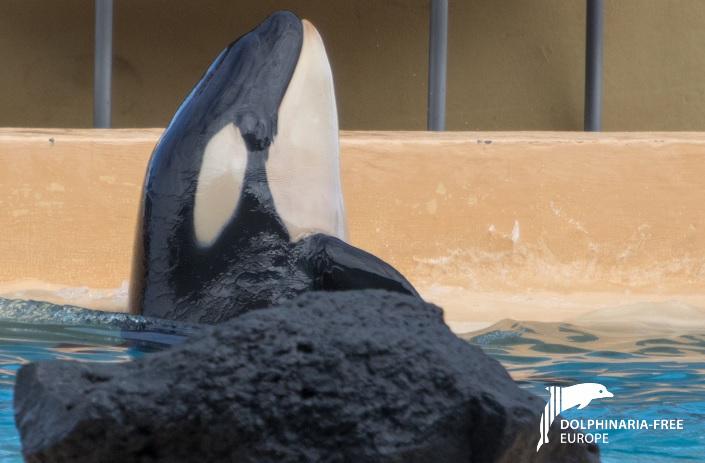 Ula, Morgan, death at Loro Parque, captivity, Dolphinaria-Free Europe